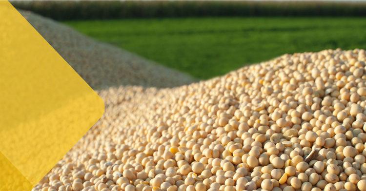 FKS Food & Agri